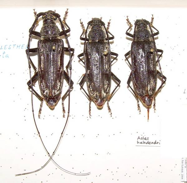 Hmyz jak ho neznáte
